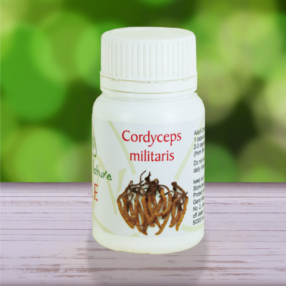Cordyceps militaris mushroom capsules from Gano Nature