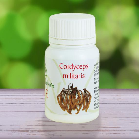 Capsule di fungo Cordyceps militaris di Gano Nature