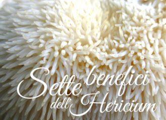 Sette benefici del fungo Lion's Mane e Heiricum erinaceus